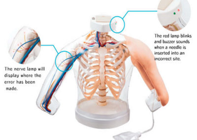 Intramuscular  Injection Model of the Upper Arm Muscle M155